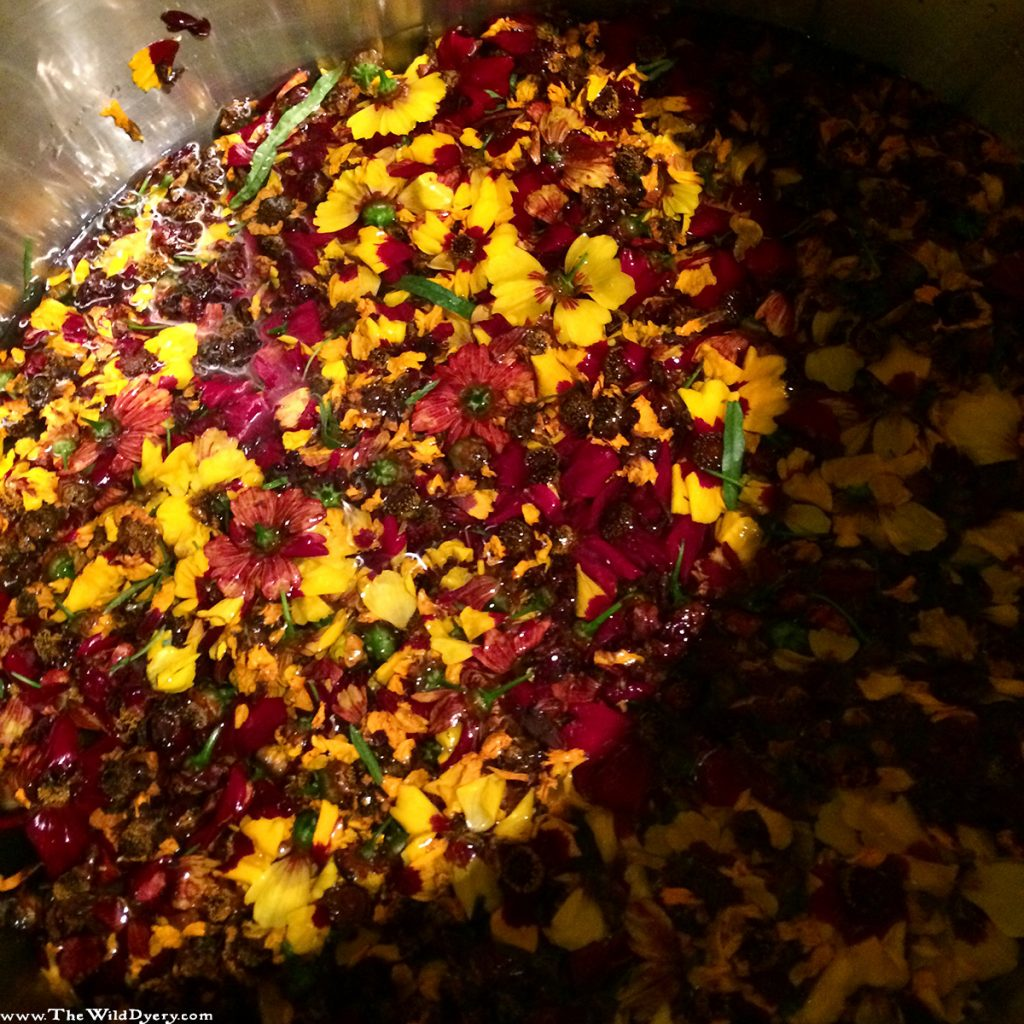 dyers coreopsis in the dye pot
